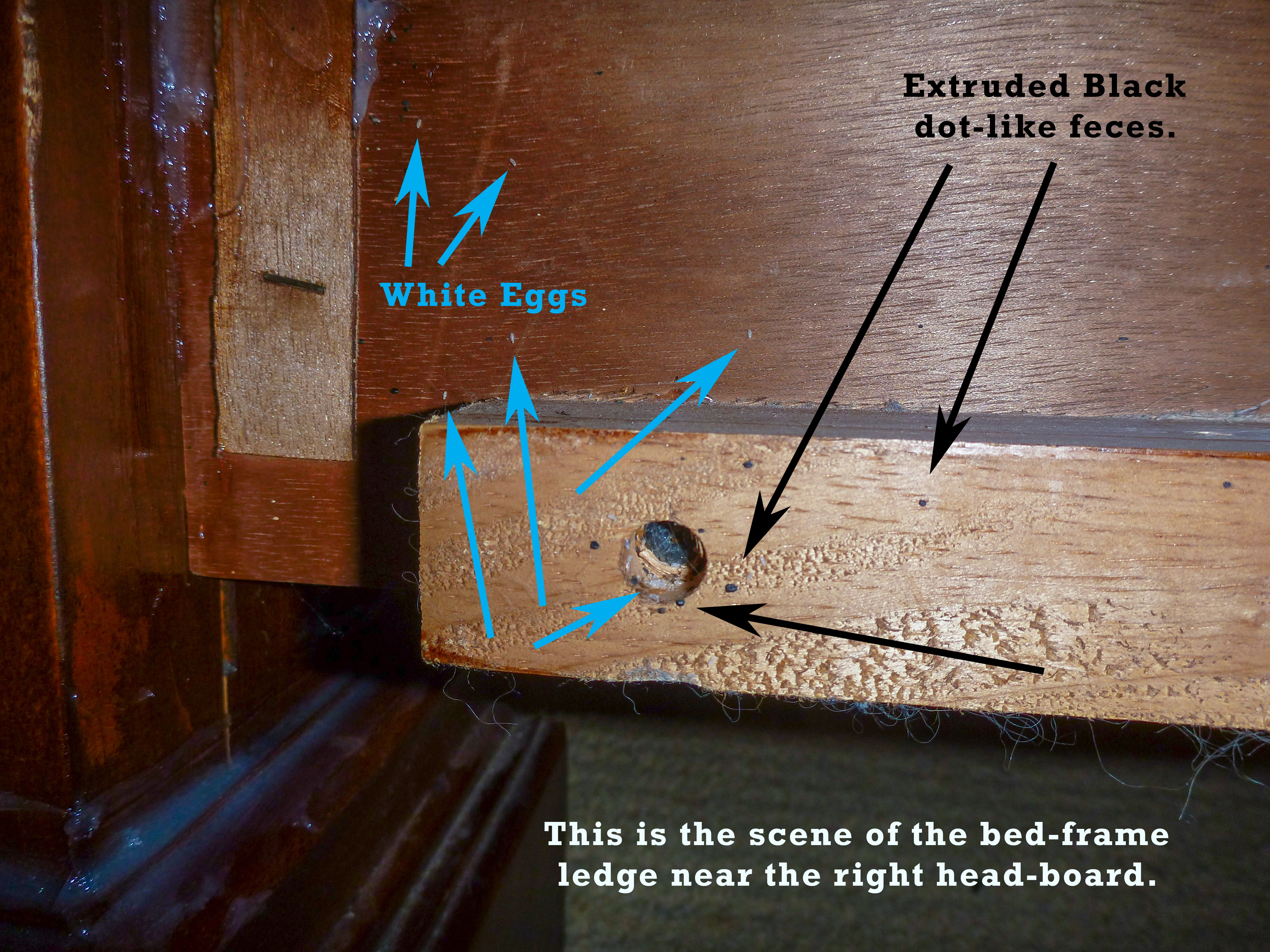 Can Bed Bugs Live In Metal Bed Frames
