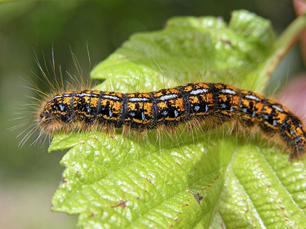 Caterpillar Extermination And Pest Control Pest Control