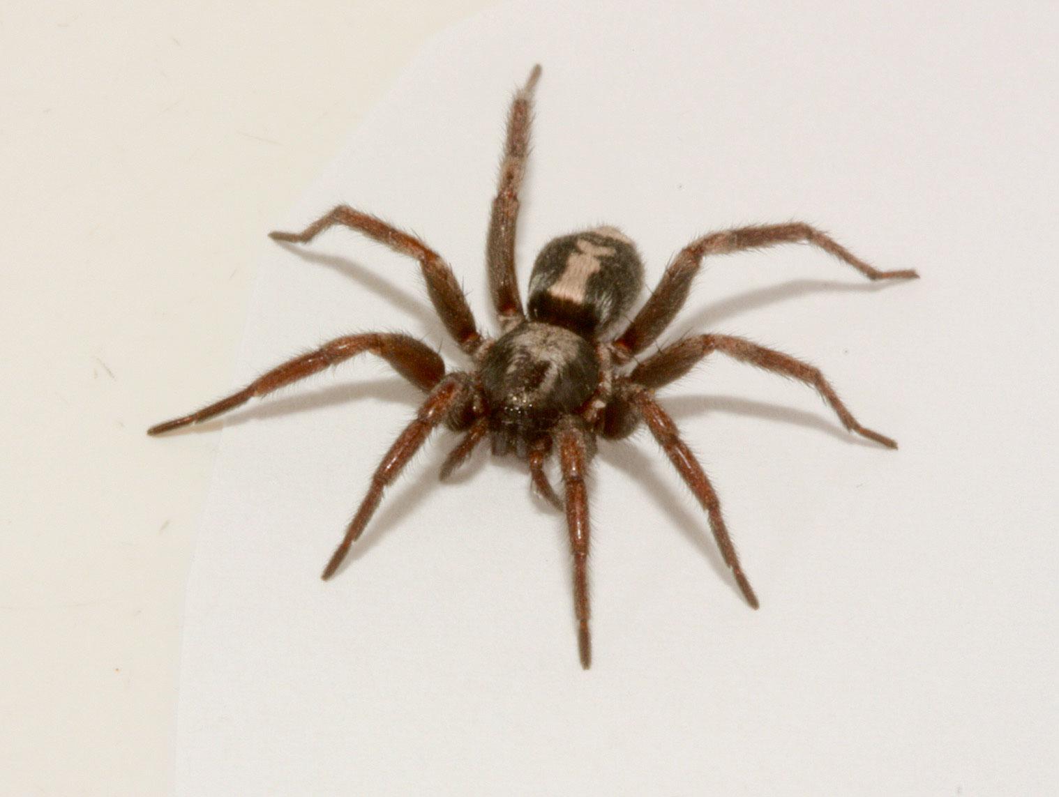 Bed Bug Exterminators In Arizona