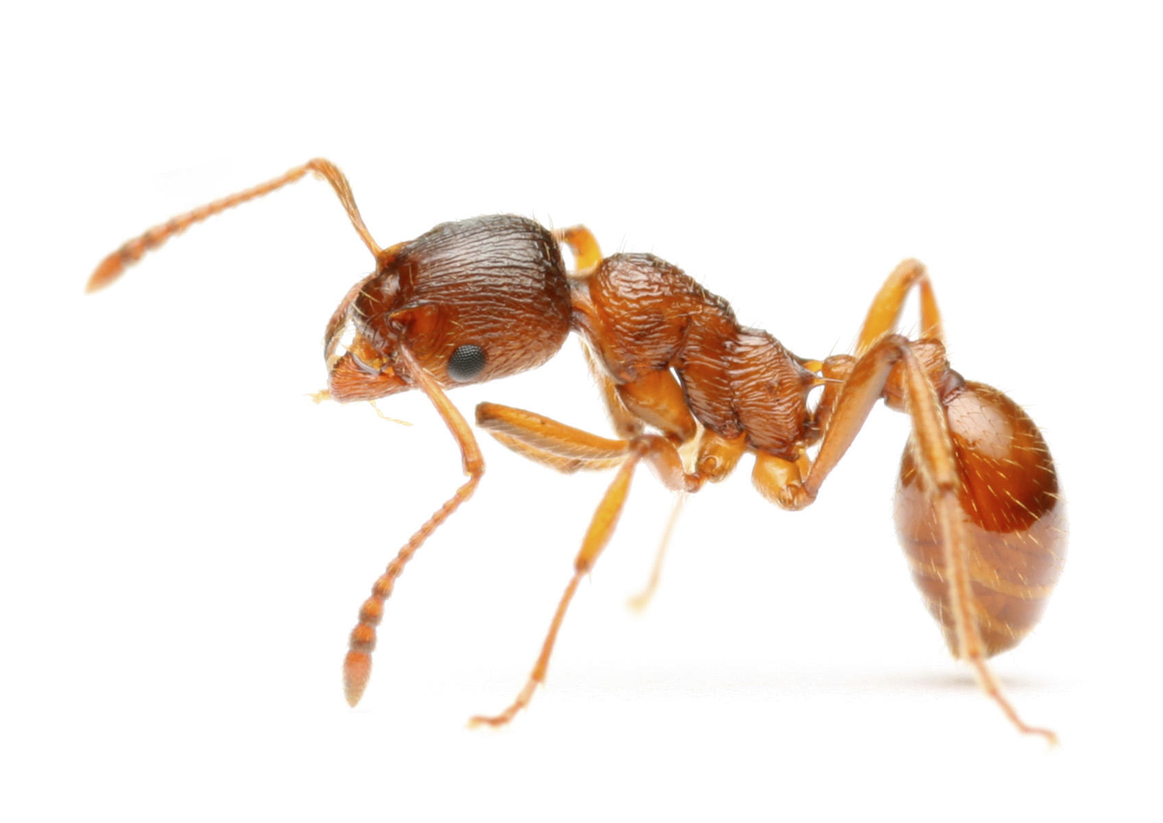 All About Ants - Toronto Bed Bug Exterminators