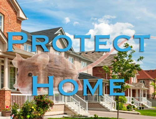 Protect Your Home against Mice Infestations