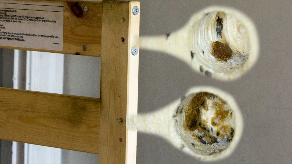 Bed Bug Nest in Two Factory Drilled Holes in a Bunk Bed FRAME