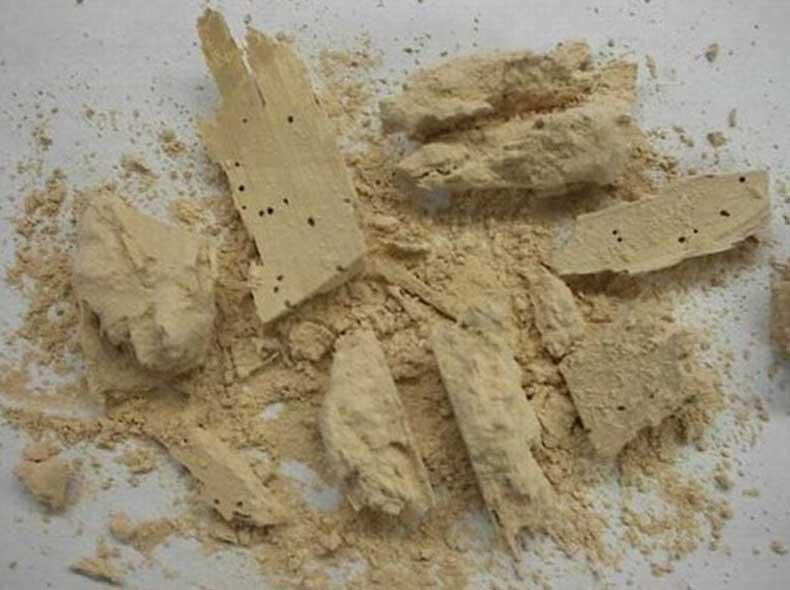 powderpost beetle extermination