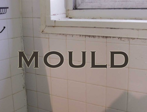 Mould Problems Causing Allergic Reactions